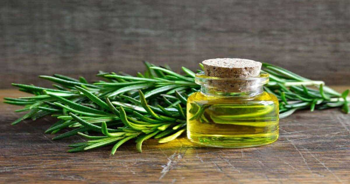 What is Rosemary Oil Good For